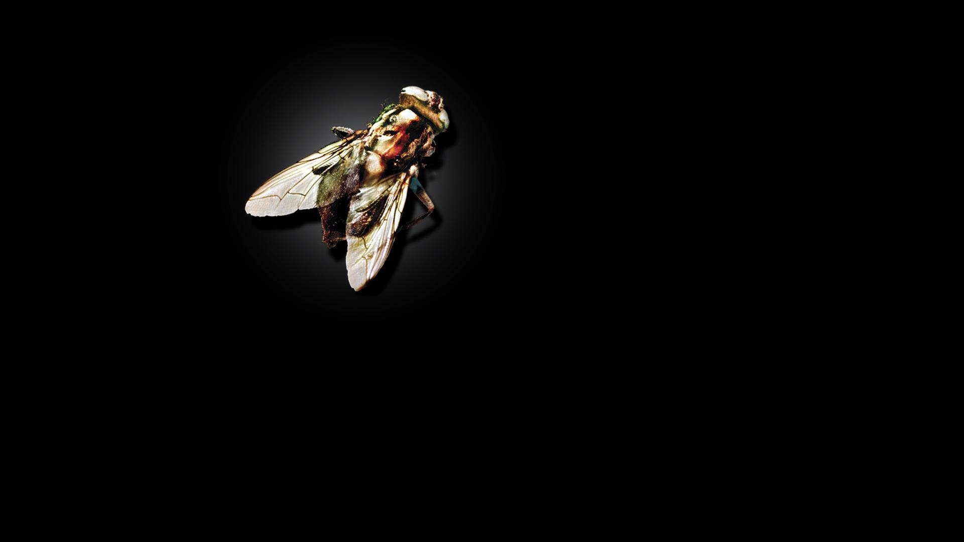 муха на стекле картинки центре рядом крафтовое